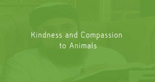 Kindness and Compassion to Animals